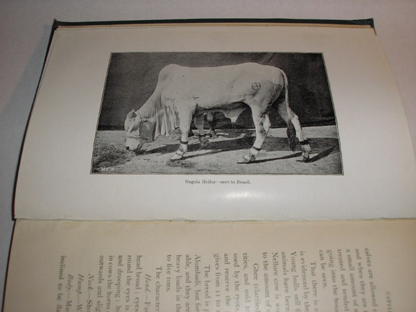 Cattle of Southern India, Lieut.-Col. Gunn